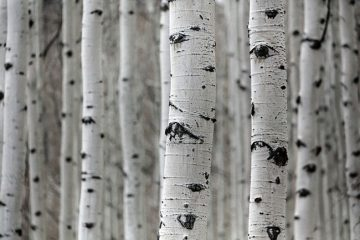 About Us Birchtrees